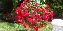 Σωστή και καλαίσθητη συντήρηση του κάθε κήπου στην περιοχή της Εκάλη