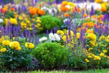 Χρωματικοί συνδυασμοί φυτικού υλικού